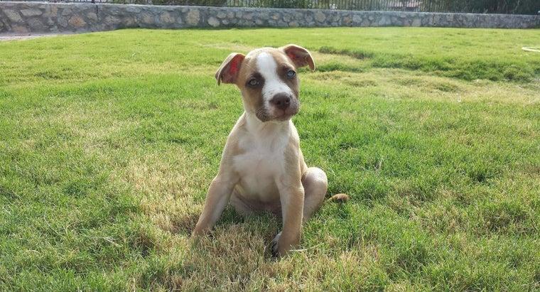 dog-breed-green-eyes