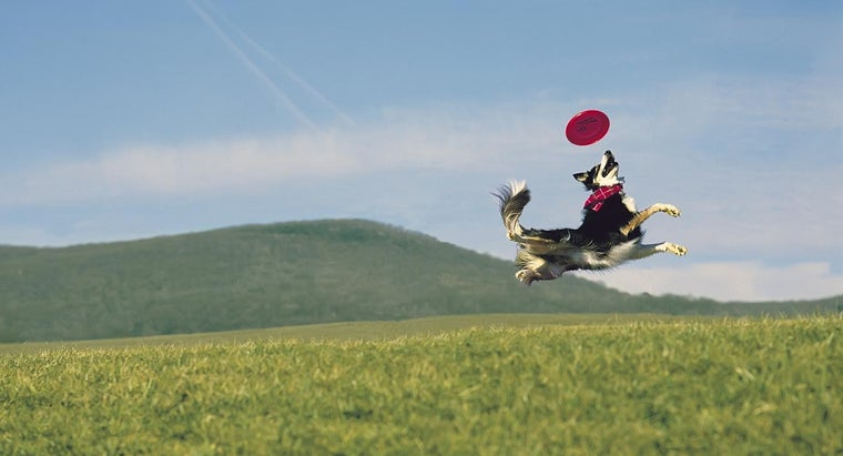 dog-breeds-frisbee-catching