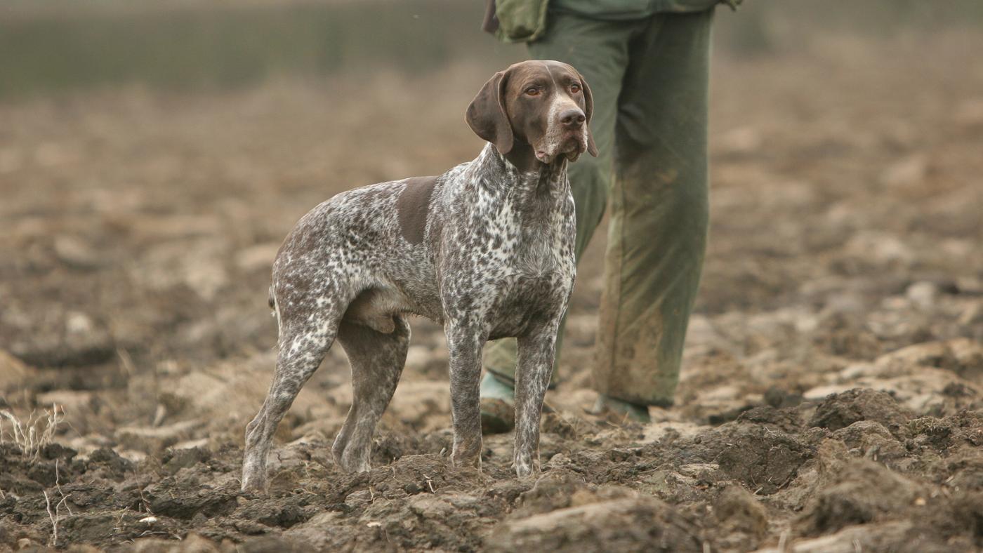 What Dog Breeds Make Good Hog Hunting Dogs? | Reference com