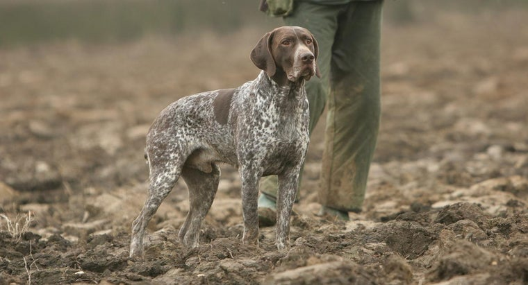 dog-breeds-make-good-hog-hunting-dogs