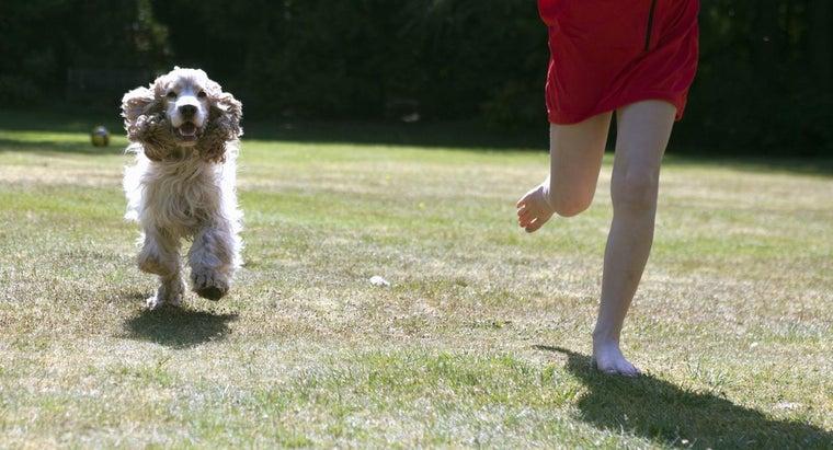 dog-follow-everywhere
