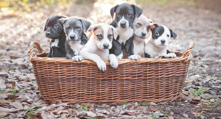dog-food-pit-bull-puppies