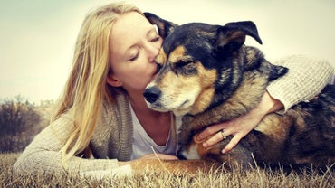 What Are Some Dog Rescue Organizations in Indiana?