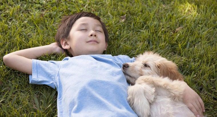 dog-sleep-much