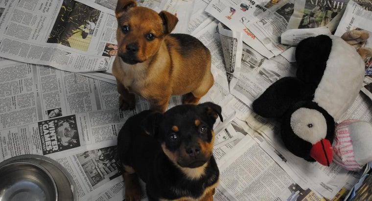 dogs-area