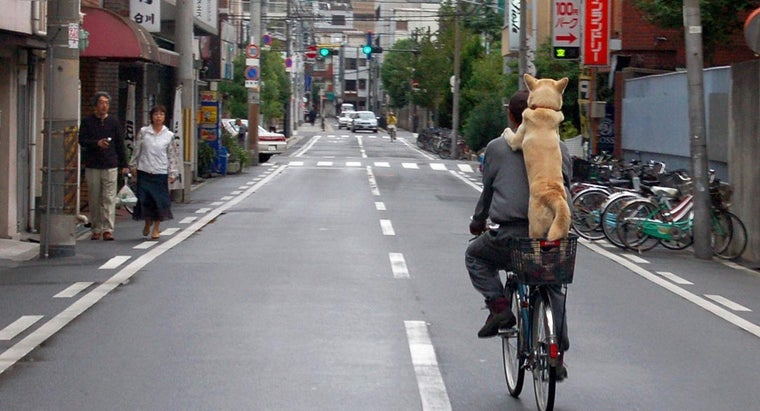 dogs-considered-man-s-friend