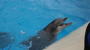 What Is a Dolphin's Hearing Range?