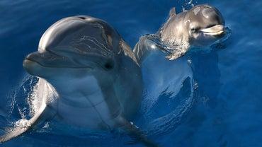 Where Do Dolphins Live?