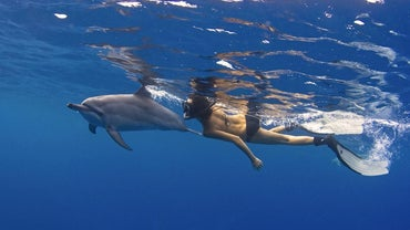 How Do Dolphins Move?