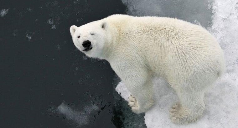 don-t-polar-bears-eat-penguins