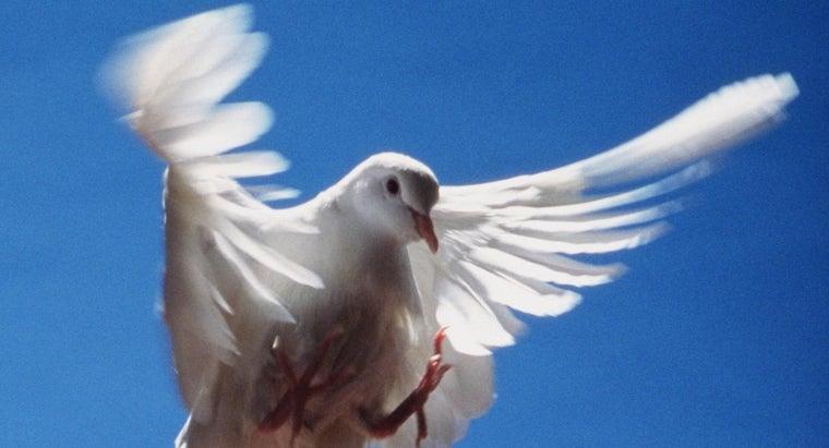 dove-represent
