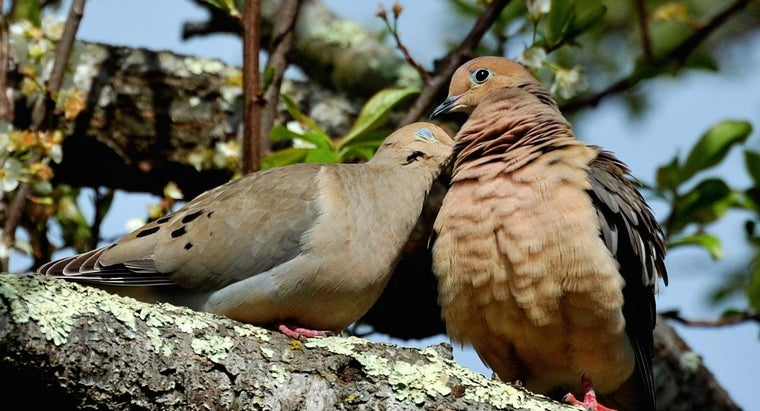 doves-mate-life