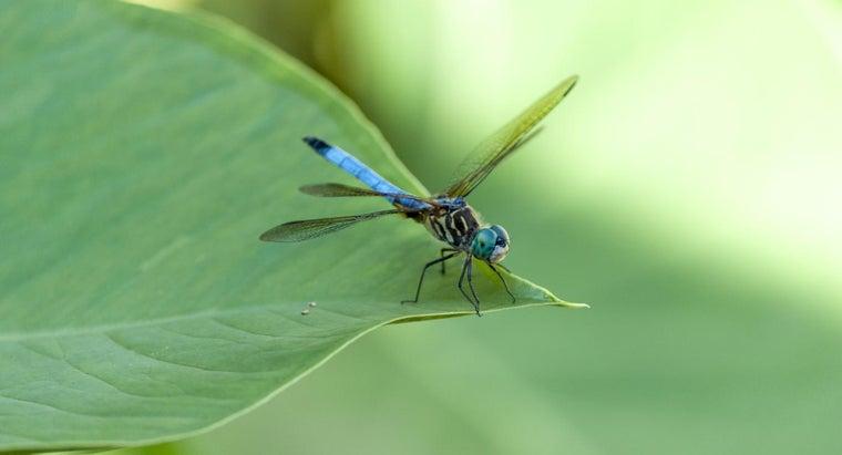 dragonflies-live