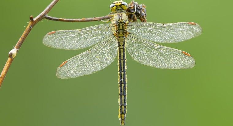 dragonfly-symbolize
