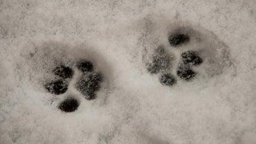 How Do You Draw Cat Paw Prints?