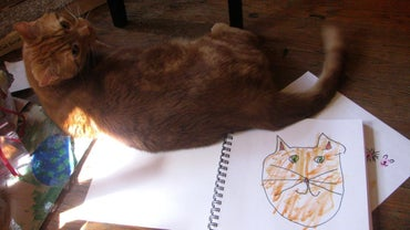 How Do You Draw a Cat?