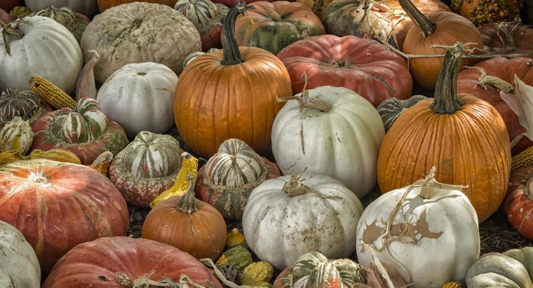 dry-out-pumpkin-shells