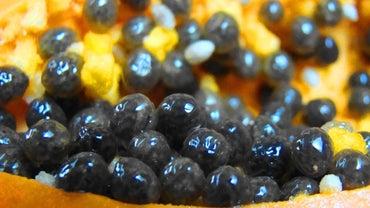 How Do You Dry Papaya Seeds?
