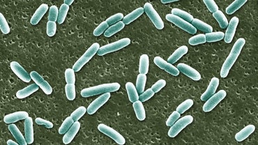 Where Does E. Coli Originate?