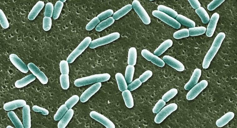 e-coli-originate