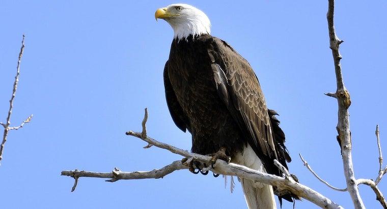 eagle-represent