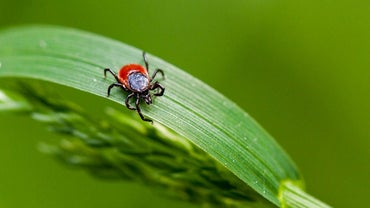 What Are the Early Signs of Lyme Disease?