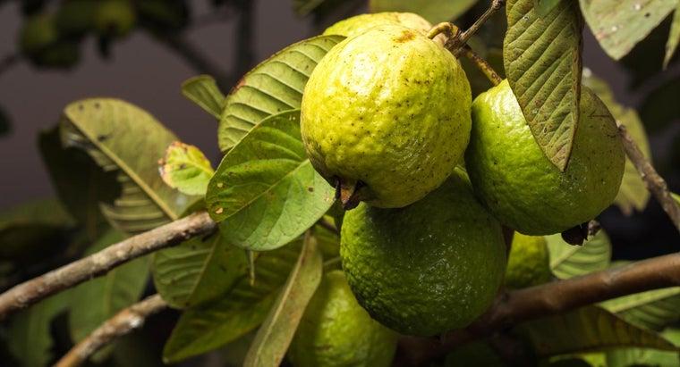 eat-guava-fruit