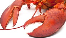 How Do You Eat a Lobster?