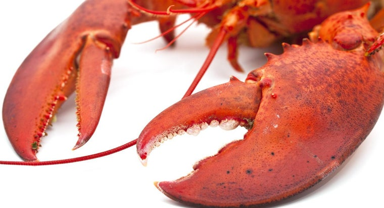 eat-lobster