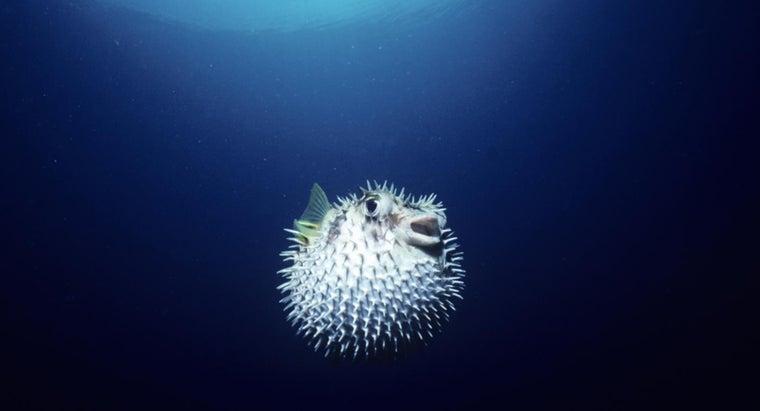 eats-blowfish