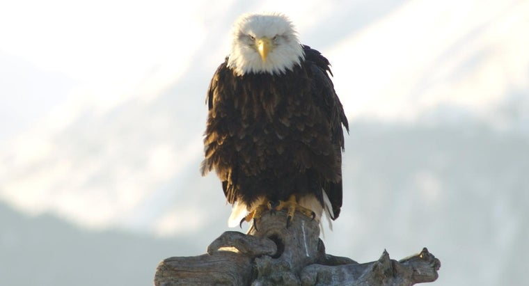 eats-eagle