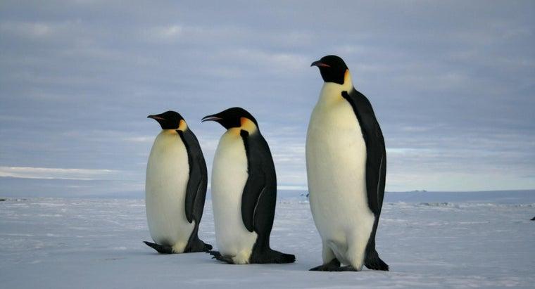 eats-emperor-penguins