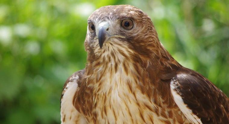 eats-hawks