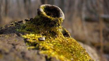 What Eats Moss?