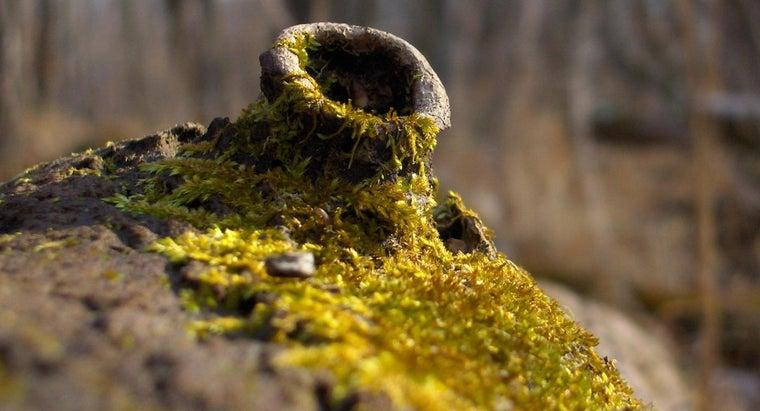 eats-moss
