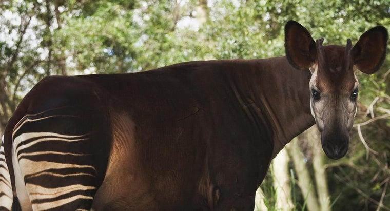 eats-okapi