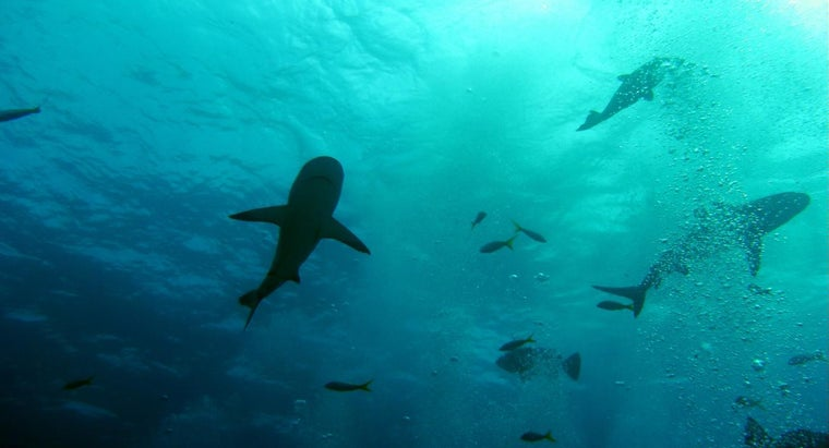 eats-shark