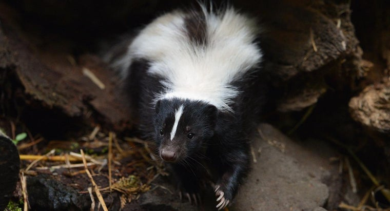 eats-skunks