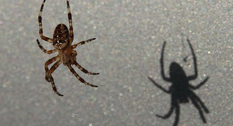 eats-spiders