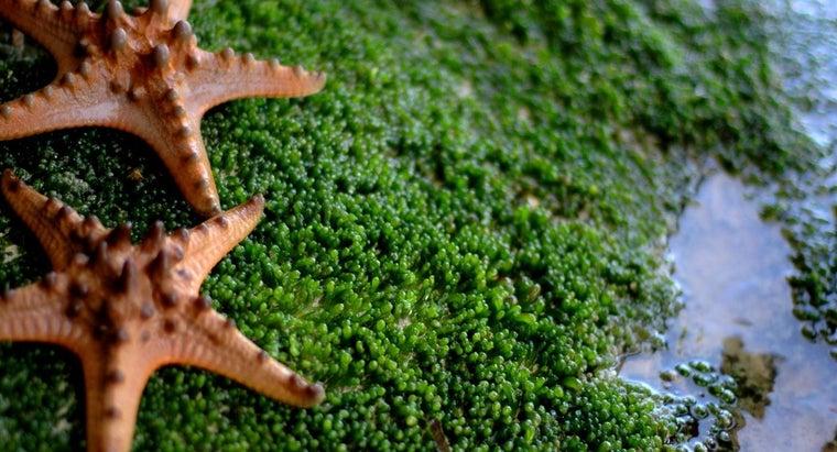 eats-starfish