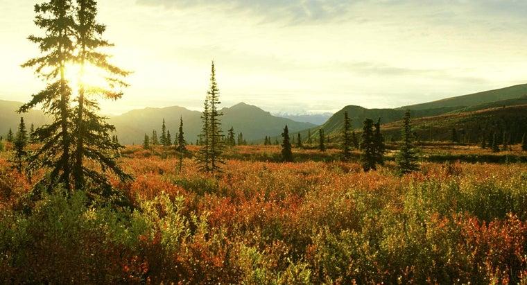 ecological-environmental-concerns-tundra-biome
