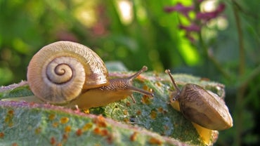 What Is the Economic Importance of Mollusks?