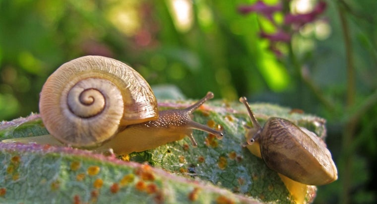 economic-importance-mollusks