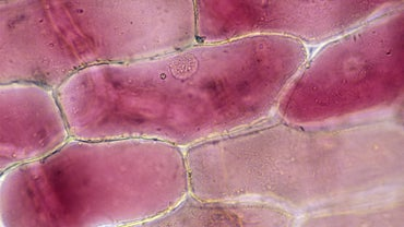 What Effect Does Iodine Have on Onion Cells?