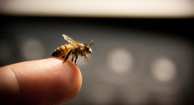 effective-treatment-stop-swelling-bee-sting