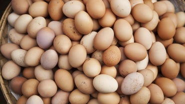 Are Eggs Considered Dairy or Poultry?