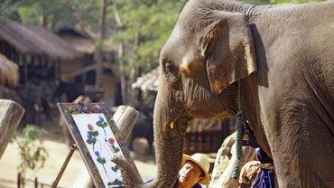 Do Elephants Have Good Memories?
