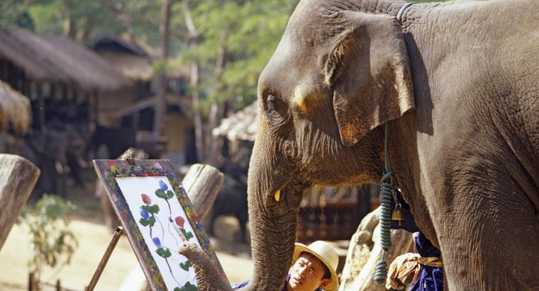 elephants-good-memories