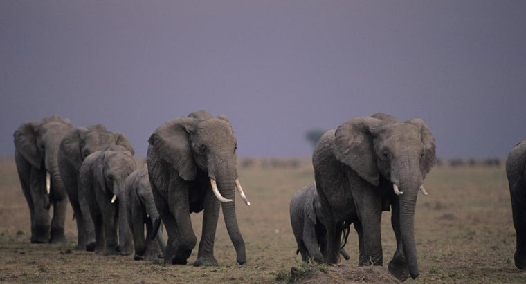 elephants-migrate