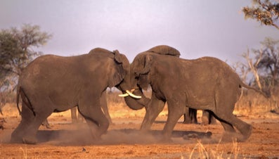 How Do Elephants Protect Themselves?